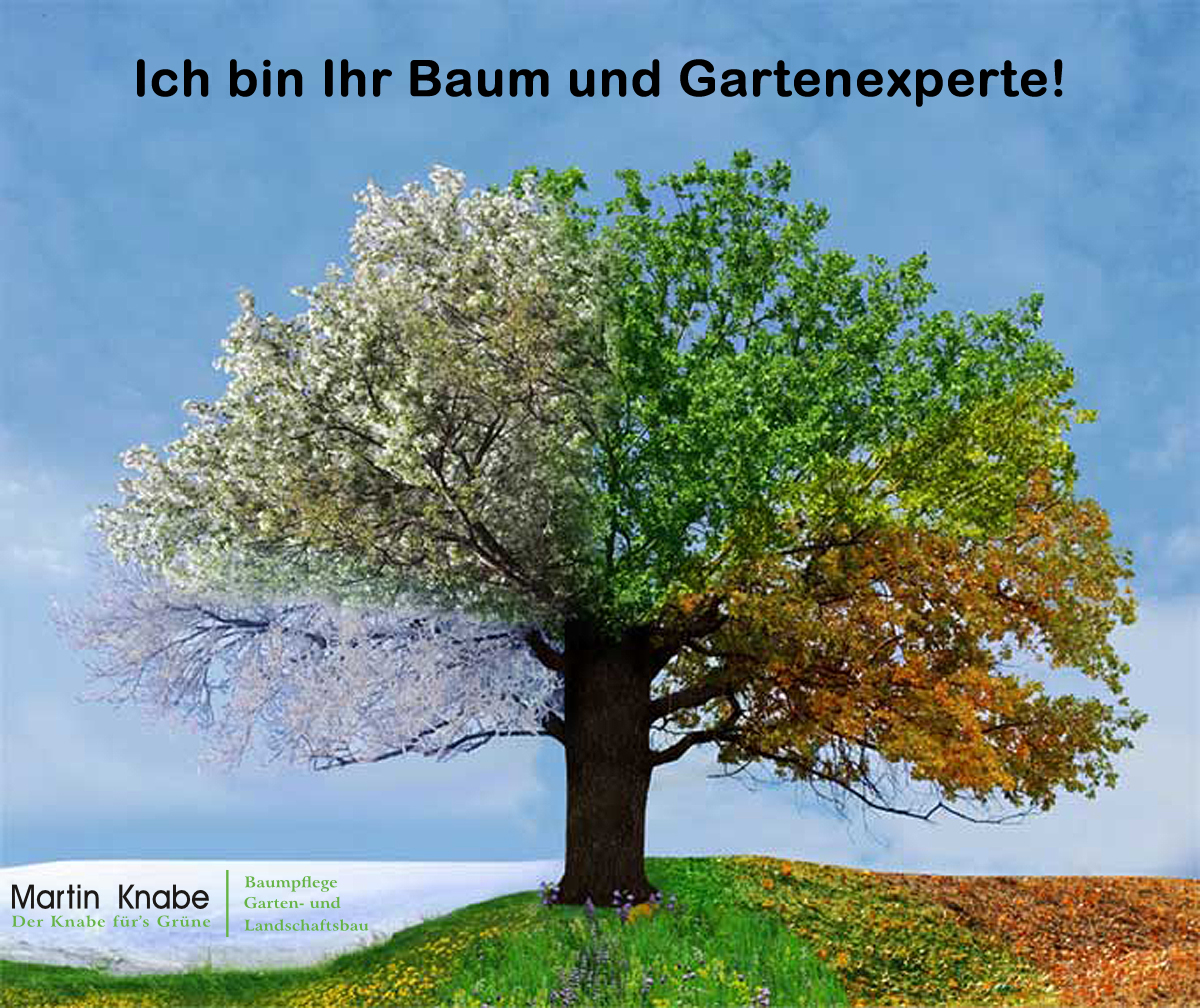 Baumpflege und Gartenbau Experte