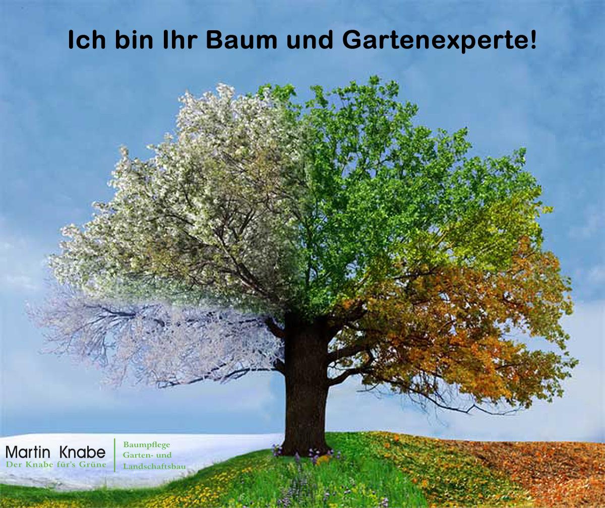 Baumpflege und Gartenbau Profi